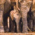 Elephant Tapestry Among Family