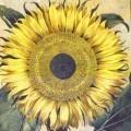 Floral Tapestry Flos Solismajor